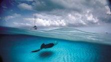 David Doubilet, il pioniere  della fotografia subacquea