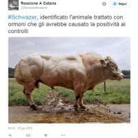 Caso Schwazer, 'colpa di una bistecca mangiata a capodanno': l'ironia sui social