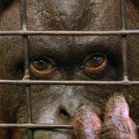 Buenos Aires, dopo 140 anni chiude lo zoo: gli animali trasferiti in rifugi naturali