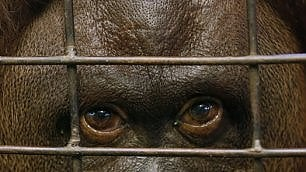 Chiude lo zoo della capitale animali trasferiti in rifugi naturali