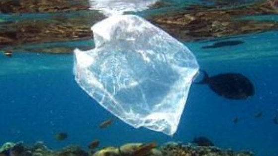 No alle microplastiche nei cosmetici c 39 una proposta di for Nei quarti di legge in affitto
