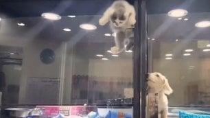La scalata del gattino  per incontrare l'amico cane