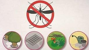 Zanzare, una battaglia persa?  Ecco come difendersi dall'assalto