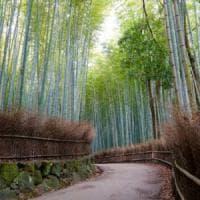 La pratica orientale che fa impazzire gli Usa: un bagno nella foresta per combattere lo...