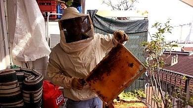 """""""Miele di balcone"""", crescono gli apicoltori urbani"""