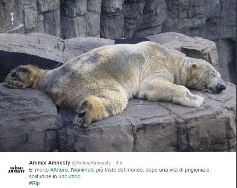 Argentina, è morto Arturo: l'orso più triste del mondo