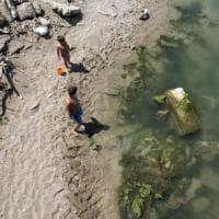 Tutti al mare con le alghe, a volte sono tossiche.Come difendersi per godersi l'estate