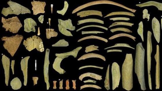 L'uomo di Neanderthal era cannibale, le prove in Belgio