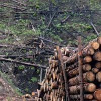Il lato oscuro del mondo forestale: introiti delle ecomafie secondi solo al narcotraffico