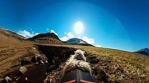 """""""Google Map"""" con le pecore"""