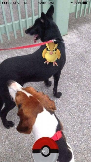 """Usa, l'iniziativa del rifugio animali: """"Catturate i pokemon insieme ai nostri cani"""""""