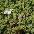 Biodiversità sotto livello  di guardia nel globo