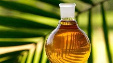 """Olio di palma, le aziende del ''sostenibile'' si difendono: """"Problemi solo in Italia e Francia"""""""