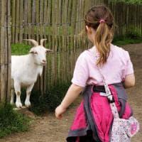 Altro che cane, la capra sarà la migliore amica dell'uomo