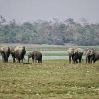 India, nel parco nazionale  dove si