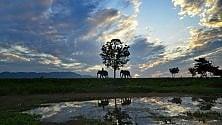 """Nel parco nazionale   di Kaziranga  dove si """"spara a vista""""  un guardaparco  ferisce gravemente  un bambino"""