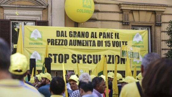 """Guerra del grano, Coldiretti: """"300mila aziende rovinate"""". Martina: """"Piano nazionale con 10 milioni"""""""