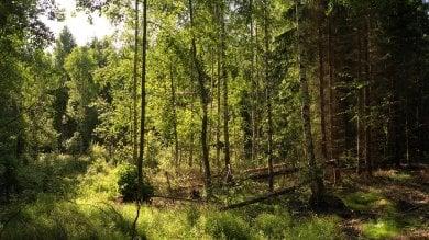 La Nursery delle conifere, nel silenzio di una foresta che cresce