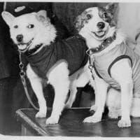 Belka e Strelka, i cani 'astronauti' non si chiamavano così