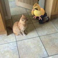 La leggenda dei giapponesi: i gatti e i cani possono vedere i Pokémon