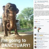 """Pakistan, liberato l'elefante Kaavan. Gli attivisti: """"400mila firme, il mondo lo ha adottato"""""""