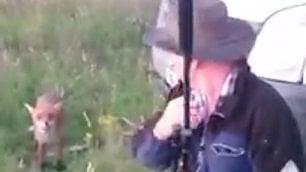 La volpe beffa il cacciatore l'animale è più furbo dell'uomo