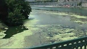 Il Po come un enorme prato il fiume coperto di vegetazione