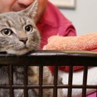 Gb, finisce per sbaglio in lavatrice: il gatto sopravvive al lavaggio