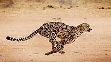 Il 60% dei grandi mammiferi rischia l'estinzione