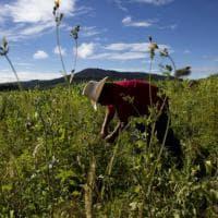 Messico, il miracolo delle lucciole: stop alla deforestazione, arrivano i turisti