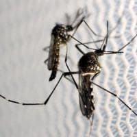 Usa, 4 casi di Zika causati da zanzare locali in Florida