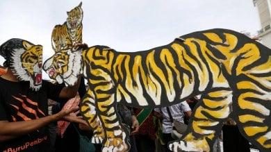 """Tiger Day, appello del Wwf  """"Chiudete quei centri in Asia"""""""