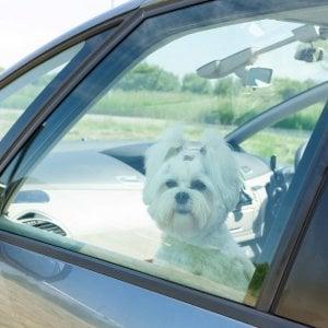 In vacanza con Fido: i consigli perché non diventi un viaggio da cani