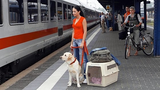 trasporto animali trenitalia
