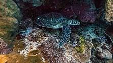 Google a Komodo:  tuffo tra natura e coralli