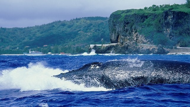 Whale watching a Tahiti -   ft