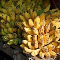 Banane a rischio scomparsa per un fungo patogeno