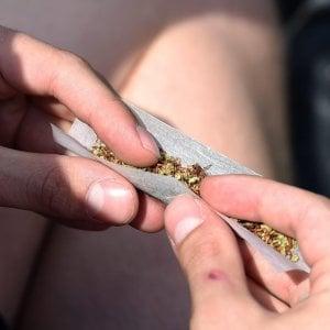 """Gratteri: """"Cannabis legale immorale e inutile, non servirebbe a colpire le mafie"""""""