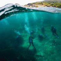 Un rifugio per i delfini: a Lipsi il primo 'Santuario' nell'Egeo