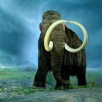 ''I mammut diventino specie protetta per salvare gli elefanti dall'estinzione''