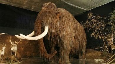 Se il mammut diventa una specie protetta