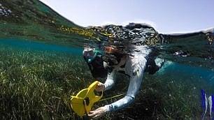 L'isola che ama i delfini   foto   Viaggio nel 'santuario' di Lipsi