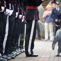 L'ispezione di Sir Nils Olav: il pinguino in carriera diventa comandante