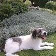 Trova casa e cambia nome cane abbandonato da auto   Video
