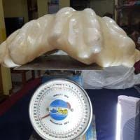 Filippine, trovata la perla più grande del mondo. Pesa 34 chili