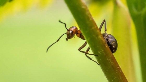 Le formiche bravissime anche in retromarcia - Le formiche in casa ...