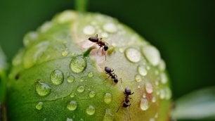 Le formiche? Bravissime anche in retromarcia
