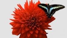 Video: fiori e insetti una storia d'amore