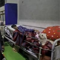 Terremoto, cagnolino veglia sul sonno del suo padrone sfollato dopo il sisma