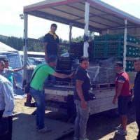L'altra faccia del Sisma, 1000 allevamenti nell'area: è emergenza animali
